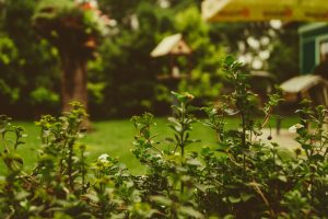 Tips for Creating Your Own Backyard Oasis